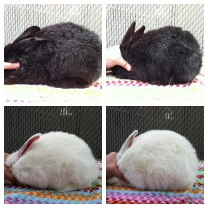 Clockwise, from top left: Ceres (doe), Hermes (buck), Fennel (buck), Daisy (doe)