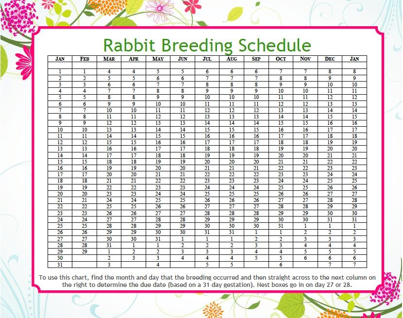 rabbit due date calculator mad hatter rabbits