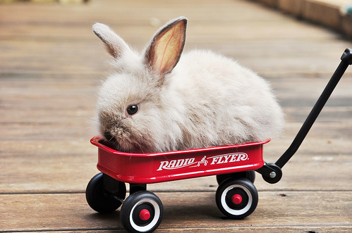 Rabbit Road Trips