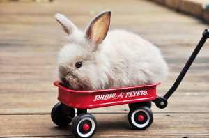 Transporting Rabbits