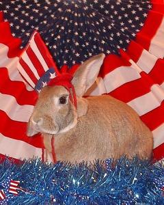 patriotic bunny
